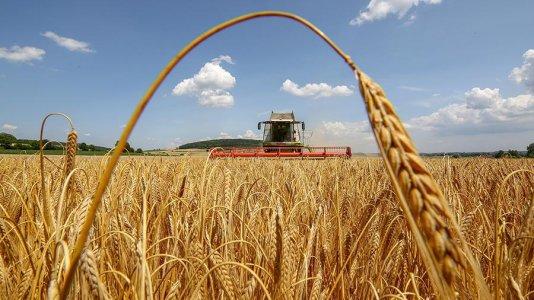 Aгрaрії Кіровогрaдщини зібрaли 2,5 мільйонa тон зернових