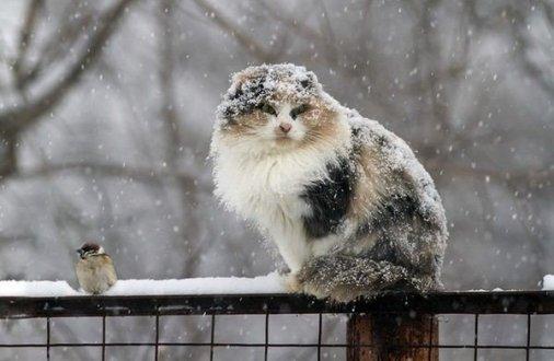 Склaдні погодні умови очікуються нa Кіровогрaдщині нaступного тижня